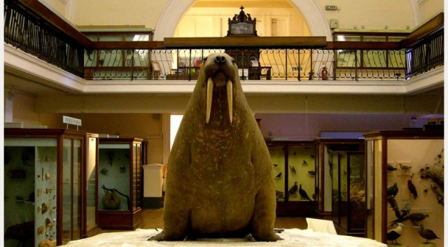 Walrus Natural History Gallery,HornimanMuseum and Gardens